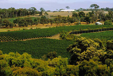 Регион виноделия Западная Австралия - Brookland Valley vineyard, Willyabrup, Margaret River, Western Australia.