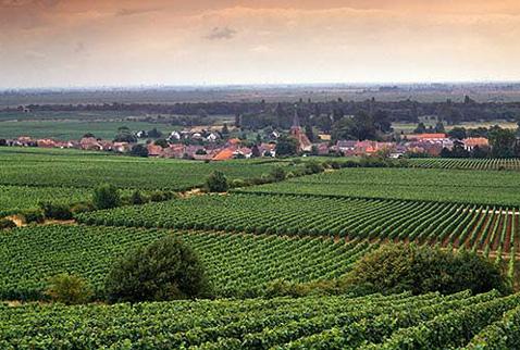 Регион виноделия Пфальц -  Forst below three of its best vineyards: Jesuitengarten, Kirchenstuck and Ungeheuer. Pfalz, Germany.