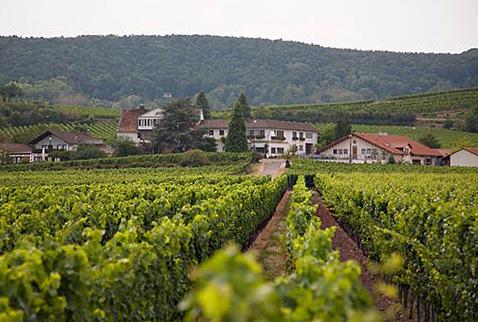 Регион виноделия Пфальц -  Weingut Fuhrmann-Eymael, seen over its vineyards. Pfeffingen, Bad Durkheim, Germany. [Pfalz]