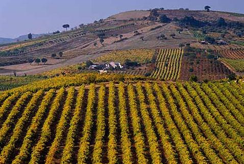 Регионы виноделия Португалии - Vineyards near Arruda, Estremadura, Portugal. [Arruda IPR]