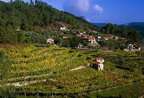 Регион виноделия Винью Верде - Vineyards near Amarante, Minho, Portugal. [Vinho Verde]
