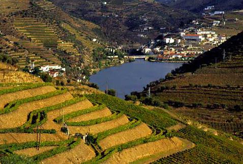 Регион виноделия Дору - Алту Доуру (Alto Douro)
