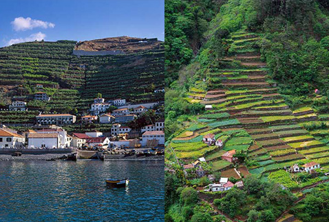 Регионы виноделия Мадейра - Terraced agriculture - including vineyards. Madeira